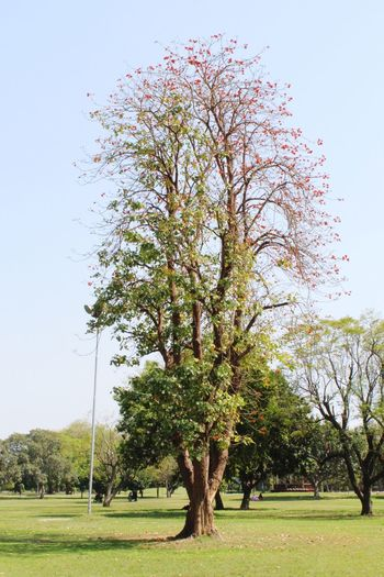 Tree Branch Flower Sky Grass Green Color