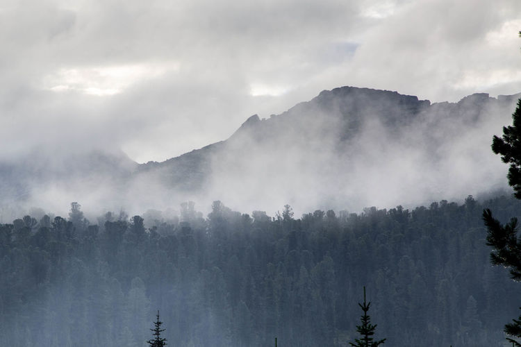 Low angle view of trees by mountains amidst fog against sky