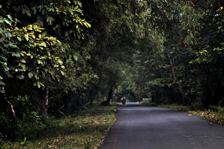 Road Amidst Forest