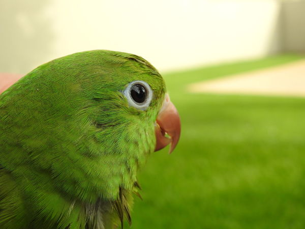 Bird One Animal Animal Themes Green Color Focus On Foreground Close-up Beauty In Nature Animal Wildlife EyeEmNewHere