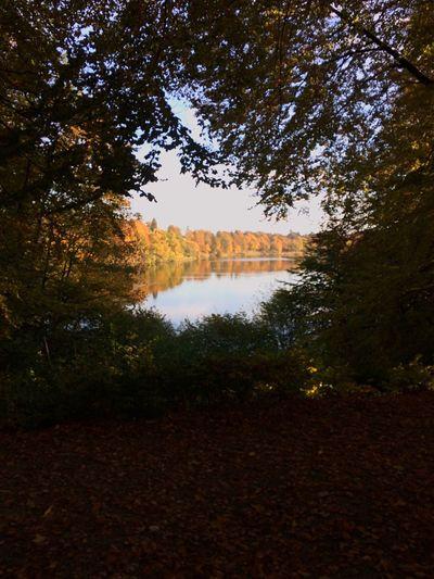 Nature Tree Reflection Beauty In Nature Water Lake No People Idyllic Outdoors Day Beauty