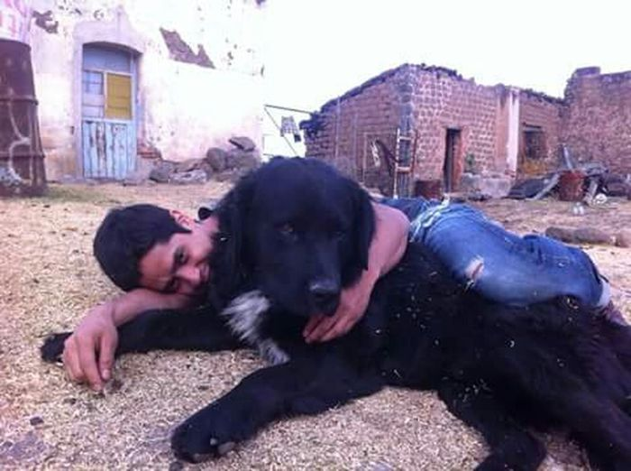 Abrazo Animal Hug Dog En El Piso Nature Relax Time  Perro Negro Black Dog Fiel