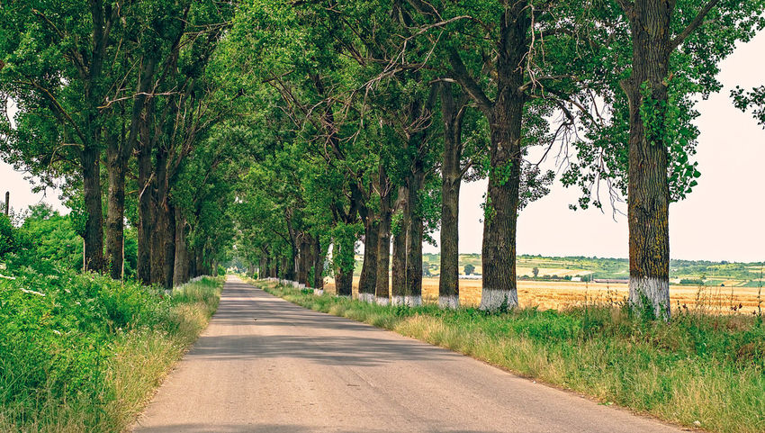 poplars on the country road Beauty In Nature Day Grass Green Color Growth Landscape Nature No People Outdoors Poplar Trees Poplars Road Road Trip Rural Scene Scenics The Way Forward Tranquil Scene Tranquility Tree Tree Trunk