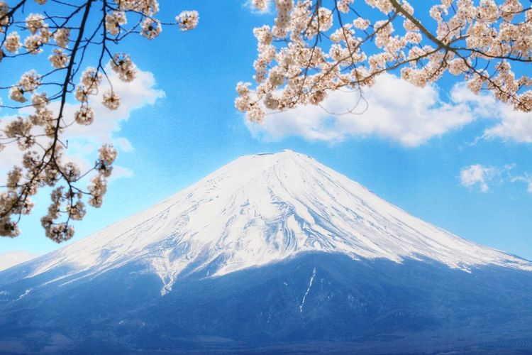 Mt. Fuji 日本 Japantravel Japannature Canon Landscape Tree Mountain Snow Cold Temperature Winter Branch Snowcapped Mountain Wilderness Area Blue Flower Cherry Blossom Cherry Tree Blossom Springtime In Bloom Mountain Peak