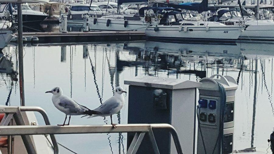 Martılar Seagulls And Sea Seagulls Seagulls In The City Pendik Marina Pendikmarina Lanscape Photography Istanbullovers