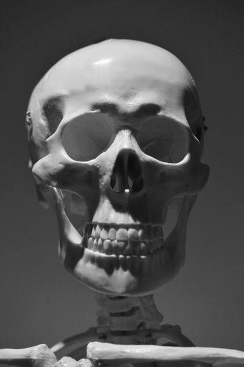 Just human Bone