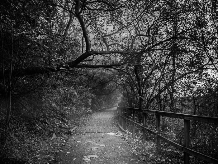Black and white photo of path down a spooky forest with trees and fog near dusk. Tree The Way Forward Nature Railing Forest Tranquility Tranquil Scene Day Outdoors Landscape Branch No People Beauty In Nature Bare Tree Scenics Halloween Spooky Spooky Atmosphere Blackandwhite Leaves Autumn Fall Beauty Fall Fall Leaves