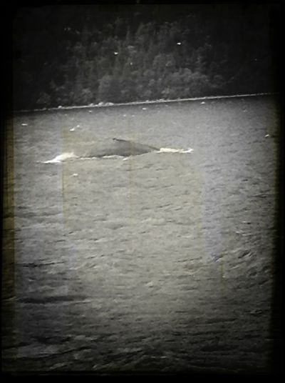 The whale here in my hometown! Home Sweet Home Whale Ocean View Beautiful :)