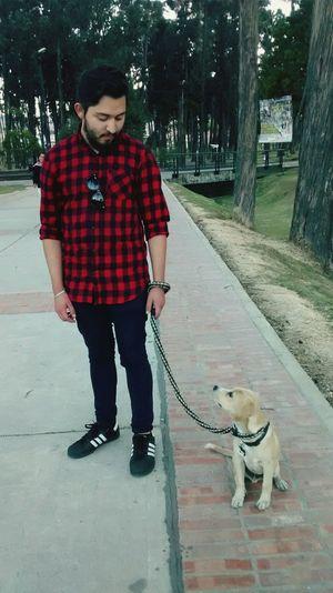 Dog Dog❤ DogLove Dogs Dogslife Dogstagram Dogsofinstagram Amorperruno Amomiperro Labrador Retriever Beagle Dogoftheday Dog Walking Doglovers Dog Life