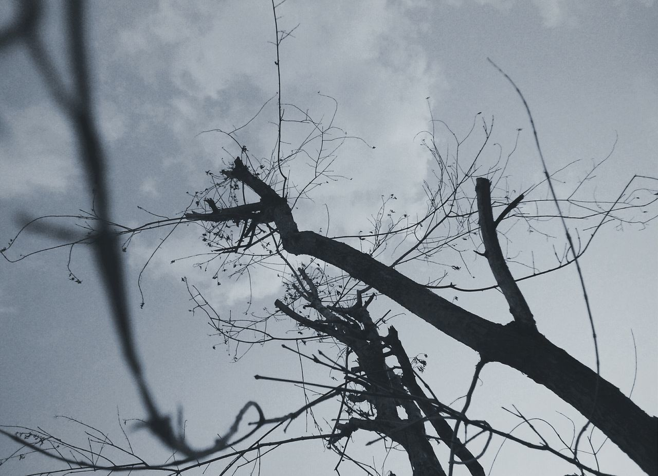 bird, low angle view, bare tree, silhouette, sky, animal themes, animals in the wild, branch, wildlife, nature, tree, tranquility, flying, outdoors, perching, dead plant, cloud - sky, no people, dusk