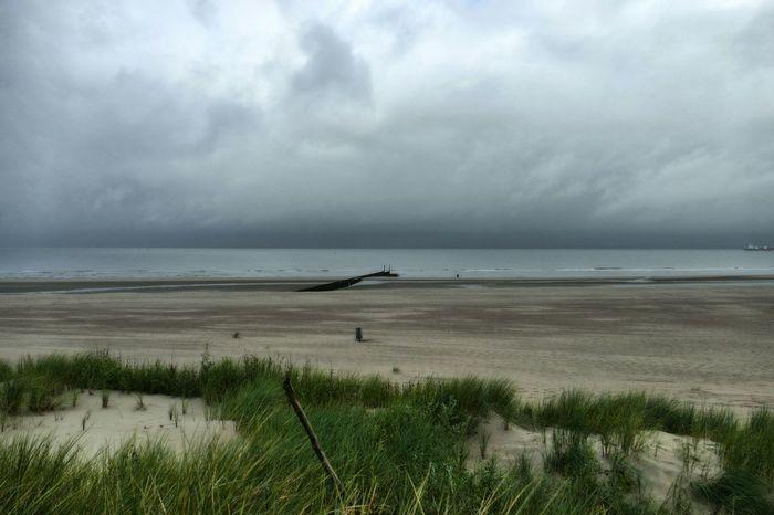 Küste Nieuwvliet Holland