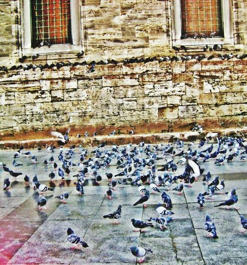 Istanbuldayasam Istanbullovers Istanbul City In Istanbul Presence Birds Istapic Followme Beatiful City ?