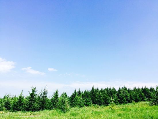 草原 蓝天