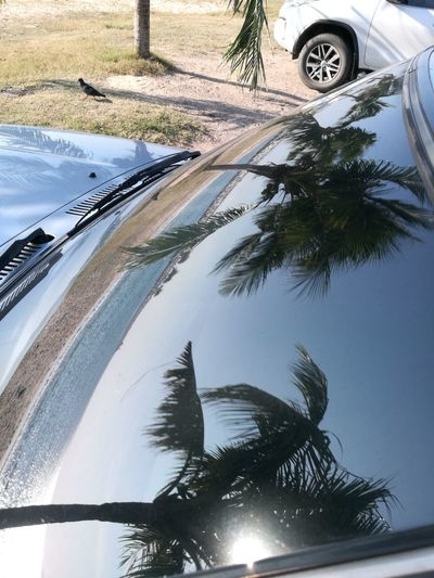 Beach Tree Palm Tree Water Car Day Nature No People Beauty In Nature Sky Outdoors