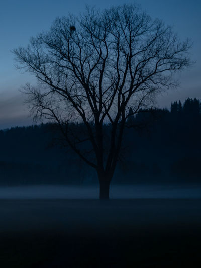 Tree Silhouette Tranquility Sky Bare Tree Beauty In Nature Plant Tranquil Scene No People Scenics - Nature Dusk Nature Land Landscape Branch Non-urban Scene Night Outdoors Environment Water