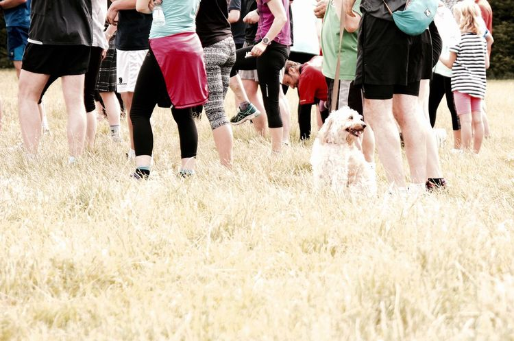 Cute Pets Day Dog Field Fun Grass Gunnersbury Park Happy Dog Large Group Of People Legs_only Leisure Activity No Face Outdoors Parkrun People Running Side By Side