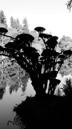 Reflection Tree Silhouette Water Outdoors Nature No People Day Sky Japonese Garden Autumn Shadow Blackandwhite Photography For My Eyeem Friends A Peaceful Weekend