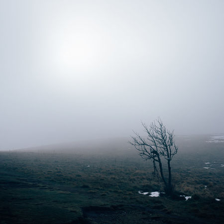 Fog Environment Sky Tranquility Tree Landscape Beauty In Nature Scenics - Nature Nature Tranquil Scene Plant Land Non-urban Scene No People Day Remote Bare Tree Sun Outdoors Hazy  Isolated Winter Foggy Mist Calm Atmospheric Tree Trunk Countryside Snowcapped Mountain Weather