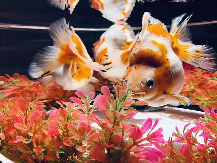 Shanghai Fish