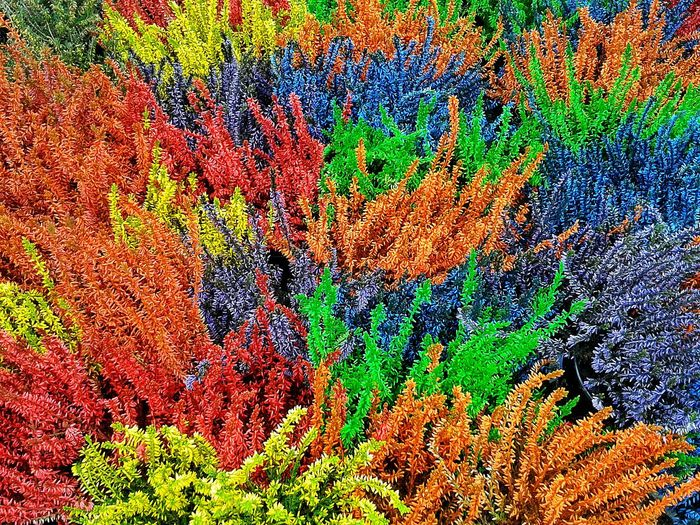 Multi Colored Abstract Growth Close-up Nature Day Outdoors Plants