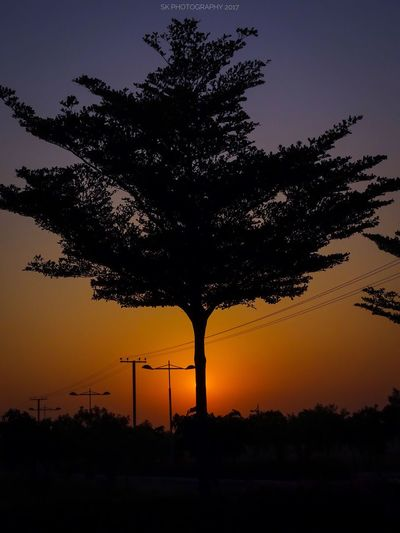 Tree Silhouette No People Nature Sky Outdoors Beauty In Nature Sunrise Nature Full Frame Sony SonyHX400V