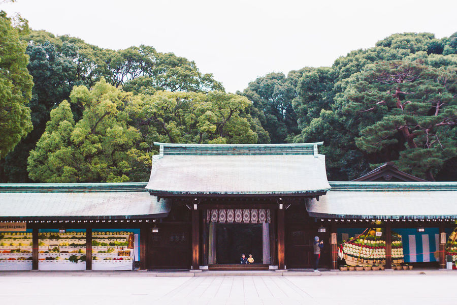 A Shrine in Tokyo, Japan Architecture Belief Built Structure Capital Cities  Culture Cultures Empty Forest Japan Park Religion Shrine Spirituality Temple Tokyo Tranquil Scene Tranquility Travel Destinations