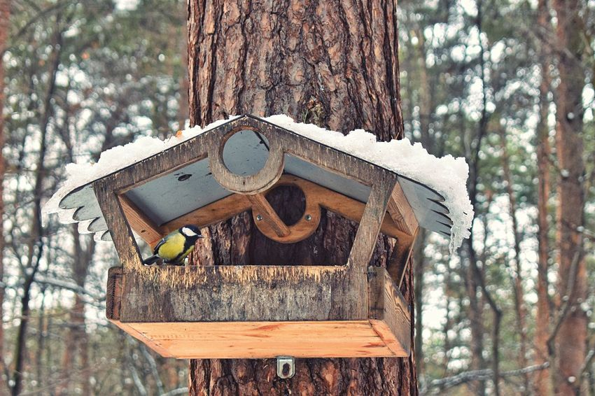 Forest walk Tree Wood - Material Tree Trunk Focus On Foreground Birdhouse No People Nature Close-up Outdoors Day Bird Photography Bird Box Bird Titmouse Forest Photography Beautiful Nature Feeding The Birds Shades Of Winter