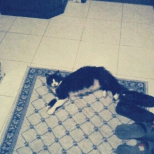 Waiting for her master, got to love that cat! Cat Mycatisbetterthanyourcar Meowmeowmodafoka