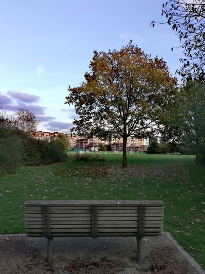 Autumn London Weather Tree Water Park - Man Made Space Sky Bench Tranquility Calm Park