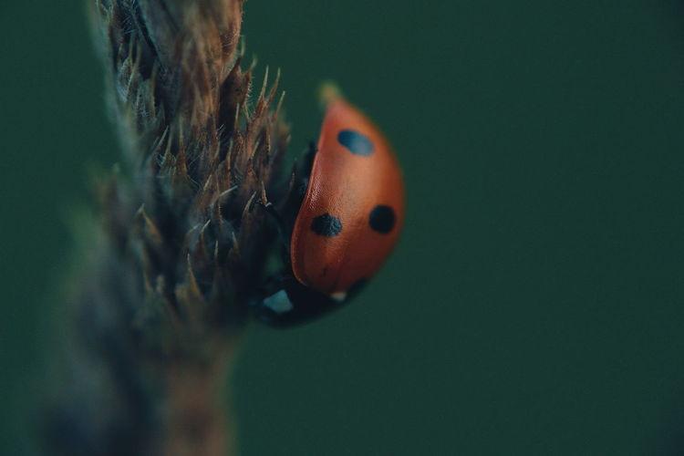 lady bug Macro Macro Photography Macro_collection Macroporn Macro_perfection Macro Nature Ladybug