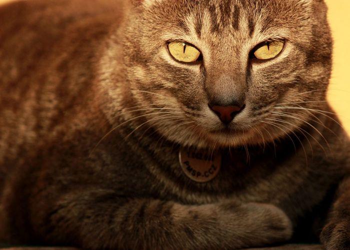 Creative Light And Shadow Jon Aryovaldo Snow, the cat taking some sunbath Sunset Cat Pets