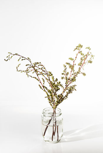 Beauty In Nature Close-up Copy Space Decoration Flower Flowering Plant Fragility Freshness Glass - Material Growth Indoors  Nature No People Plant Still Life Studio Shot Tree Vase Vulnerability  White Background