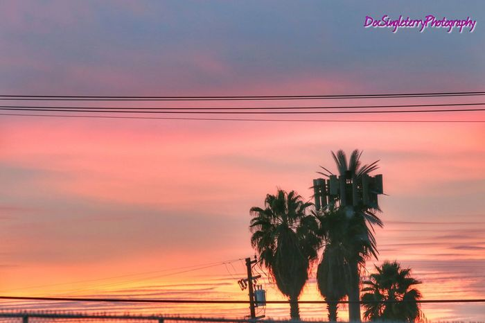Pastel Palm Trees Sunset Outdoors Palm Tree Colorful Pastel Colors Skyporn EyeEmBestPics From My Point Of View ForTheLoveOfPhotography Beauty