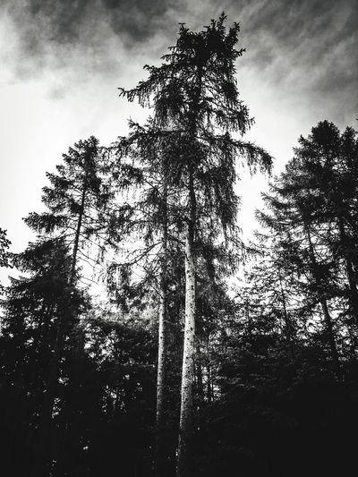 Dark Tree Sky Low Angle View Cloud - Sky Plant Nature Silhouette