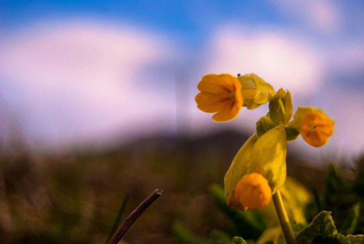 Nature Flower Yellow Nature Beauty In Nature Freshness Flower Head Outdoors No People Day Plant Fragility Beauty In Nature Beautiful Nature Macro Macro Nature First Eyeem Photo Blur