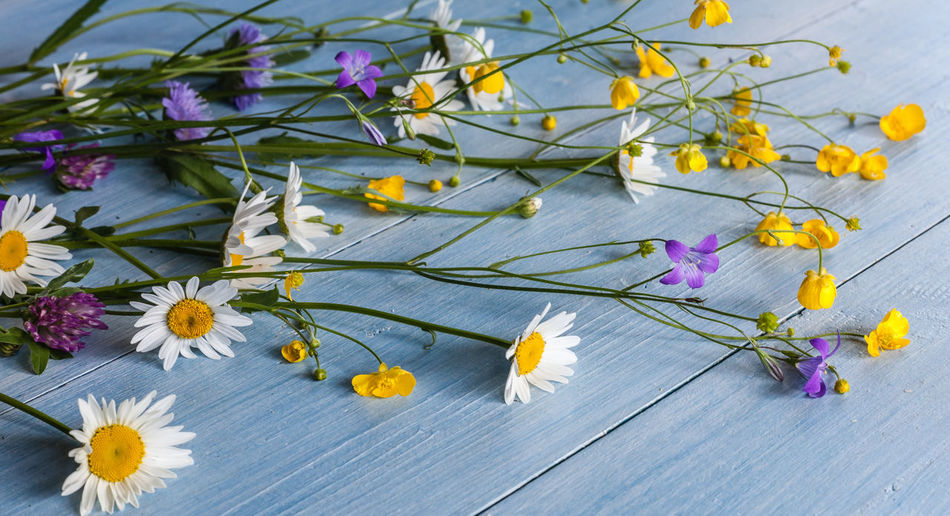 Bouquet of wild flowers on a wooden horizontal Color Indoor, Petal, Plant, Table, Cosmos, Aster, Food, Blossom, Summer, Wildflower, Floristry, Small, Leaf, Flower Arranging, Cake, Spring, Sitting, Daisies, Cutting, Daisy, Blooming, Floral Design, Flowering Plant, Top, Asteraceae, Piece, Beauty In Nature Blossom Close-up Flora, Petal, Plant, Table, Cosmos, Indoor, Aster, Food, Blossom, Summer, Wildflower, Floral, Floristry, Small, Leaf, Flower Arranging, Cake, Spring, Sitting, Daisies, Cutting, Daisy, Blooming, Floral Design, Flowering Plant, Top, Asteraceae, Bright, Piec Flower Fragility Freshness Nature No People Petal Plant Purple Springtime Yellow