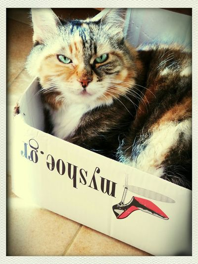 her two favorite things ...sunshine and paper boxes! Mycat