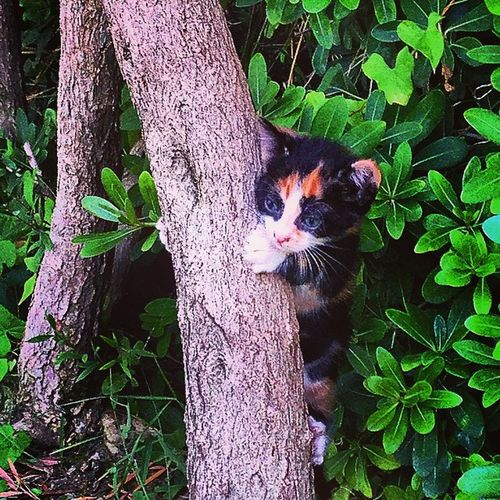 Kitty Kitten Hiding Tree Hugging A Tree Tree Trunk Treehugger Cat Catsofinstagram Cats Kittens Kittycat Kittenoftheday Cute Cutepets Animals Whatareyoudoing Hide And Seek Whereareyou Hiding From The World Lonely Gettyimages Kitty Cat Animal_collection Everything In Its Place Perspectives On Nature