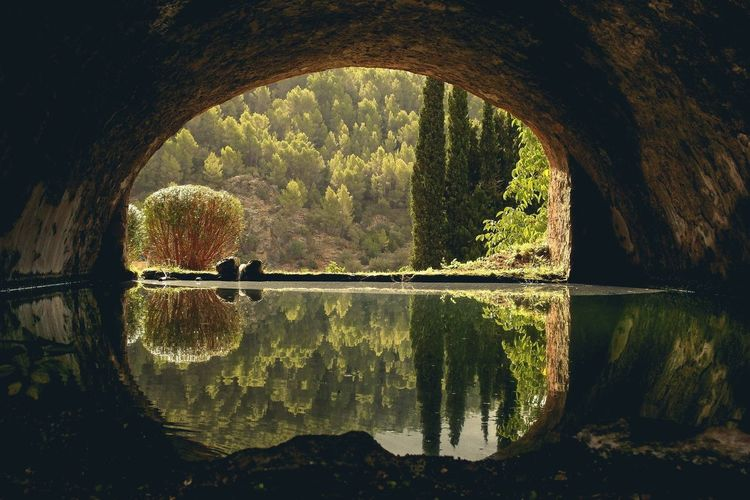 Reflection Of Trees In Tunnel Water