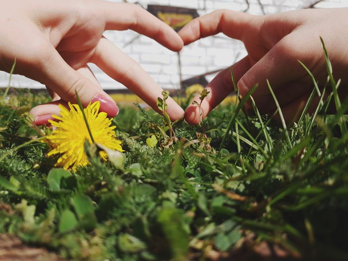 Cropped image of hand holding flowering plant