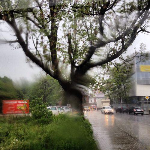 IPSNoFilter Rain Nature Tree