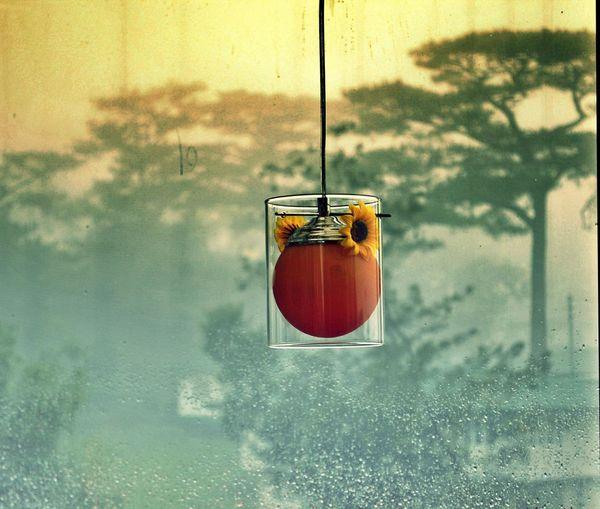 Lantern hanging against wet glass