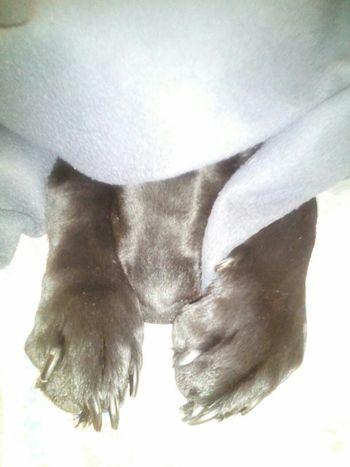 Sleepy Doggy Dogstagram Doglovers
