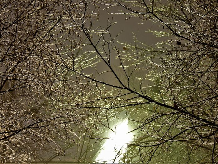 Backgrounds Beauty In Nature Branch Cold Winter ❄⛄ Icy Tree Branches Nightphotography Outdoors Tree The Great Outdoors - 2017 EyeEm Awards