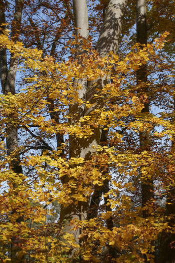 Low angle view of autumnal trees in the forest