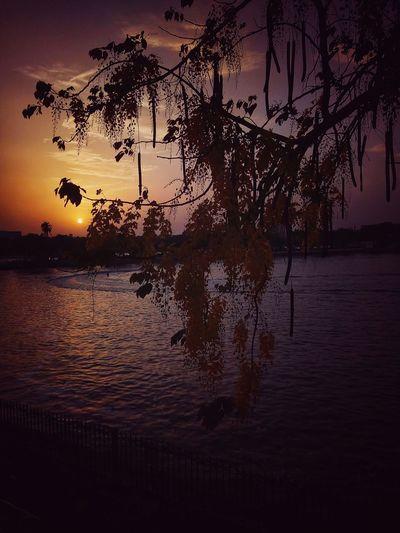 sunset Kankaria Lake Kankaria Nagina Wadi Ahmedabad Heritage City Bird Tree Water Sunset Rice Paddy Lake Silhouette Reflection Dawn Sky Flock Of Birds The Great Outdoors - 2018 EyeEm Awards