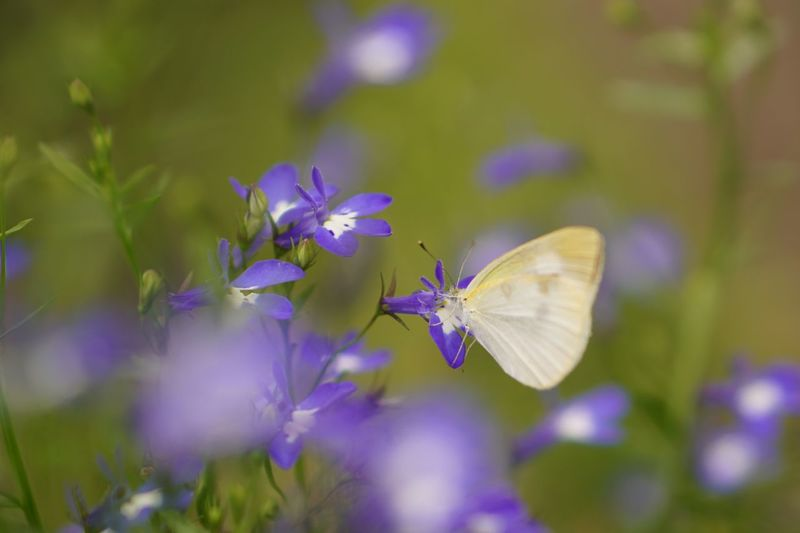 Capture The Moment Flower Nature Nature On Your Doorstep Butterfly Insect Fragility Growth Outdoors Plant Freshness Green Eye4photography  Taking Photos