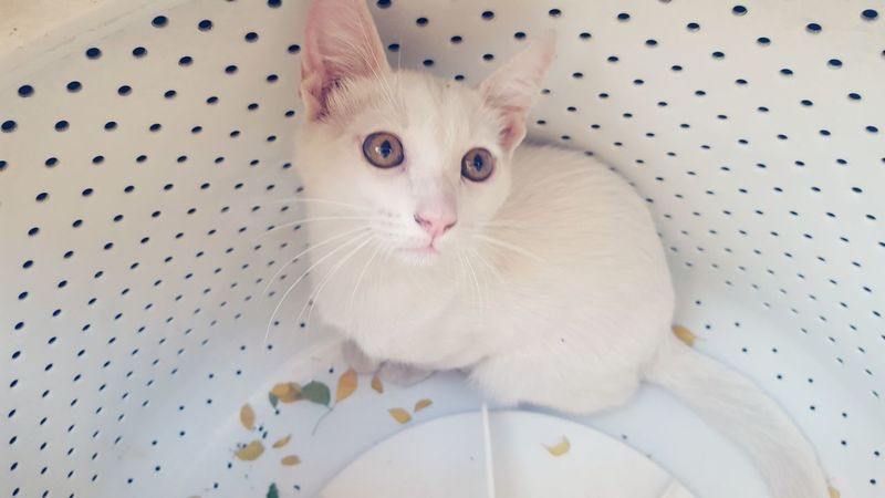 Help🙀 Pets Cat Animal Themes Domestic Cat Pet Portraits Domestic Animals Mammal Naughtycat The Week On EyeEm