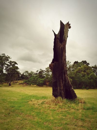 Old tree in the