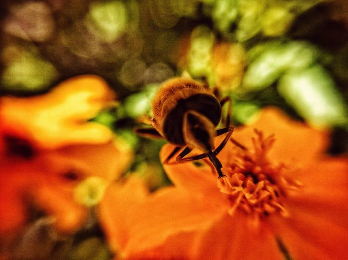 Biene München Natur Hi! Blumen Berge Deutschland Fliege Insekten Bad Feilbach Gelb The Weekend On EyeEm The Week Of Eyeem Bayern Germany Nature Art Insekt The Week On EyeEem Smartphonephotography